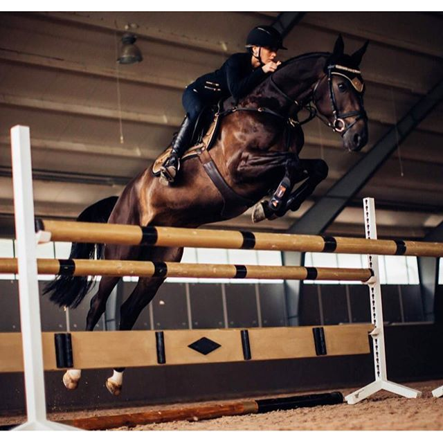 Jumping my way towards the weekend! ✨ #equestrian #equestrianstockholm #horse #horses #equestrianperformance