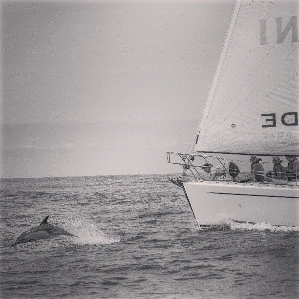 Knysna sailing with springtide charters South Africa