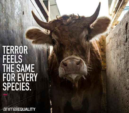 Animal Cruelty Quotes Fair The 25 Best Animal Cruelty Quotes Ideas On Pinterest  Quotes