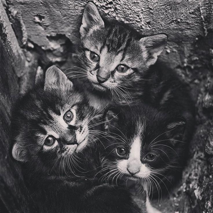 Sokaklarda yaşayan kedilerimizi de unutmayalım bi de yarının pazartesi olduğunu   #istanbul 2013