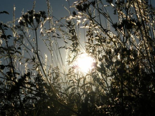 Západ slunce na louce