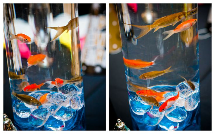 goldfish centerpieces for wedding reception | wedding reception details!