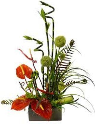 http://main.wikifoundry.com/account/funeralplantarrangem  Get More Info - Popular Funeral Plants,  Funeral Plants,Plants For Funerals,Funeral Plant,Common Funeral Plants,Popular Funeral Plants