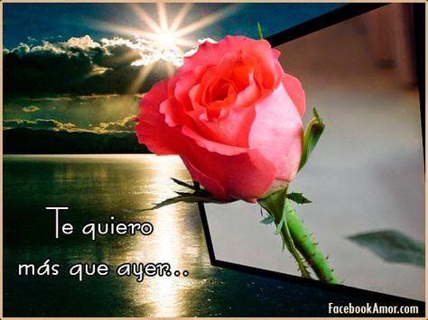 Imagenes de rosa rojas con frase de amor - Imagenes Bonitas para Facebook Amor y Amistad