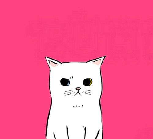 illustration | cat on hot pink