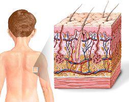 Durante un masaje, en la dermis ocurren los procesos de mejora de la circulación sanguínea y el flujo linfático, liberando los vasos periféricos, acelerando de esta forma la eliminación de los productos de desecho, así como la entrega de varios nutrientes a los tejidos del área que recibieron el masaje.