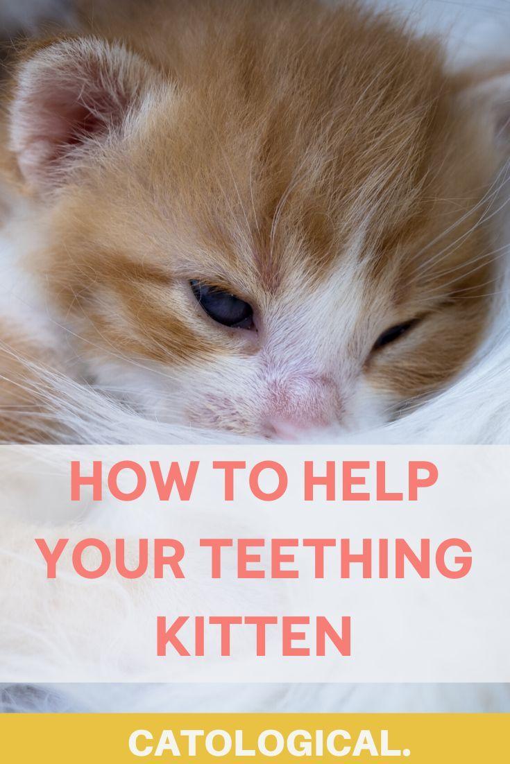 What To Do If Your Kitten Is Teething In 2020 Kitten Care Kitten Mom Kitten Health