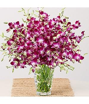 Purple Dendrobium Orchids - Flowers - http://yourflowers.us/purple-dendrobium-orchids-flowers/