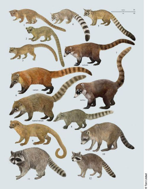 Order Carnivora Animals