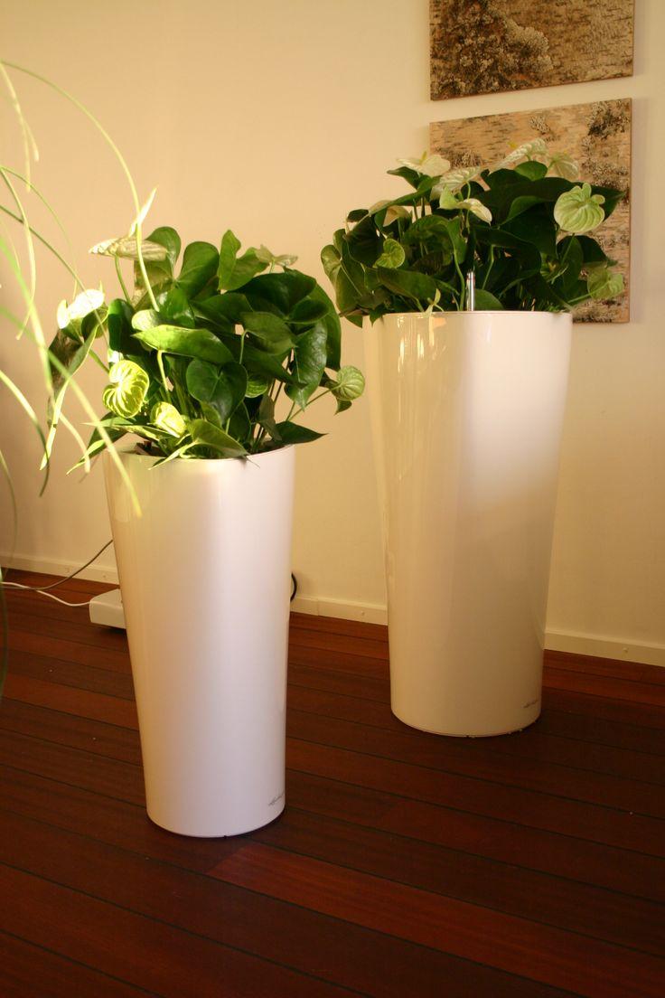 17 best images about puhdista ilmaa viherkasveilla on pinterest planters dublin and plants. Black Bedroom Furniture Sets. Home Design Ideas