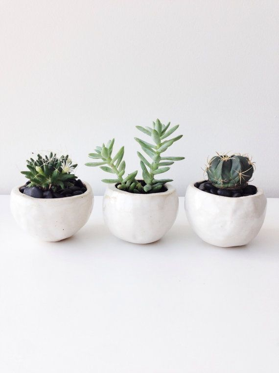 Succulents And Cacti Plants White Flower Pots With Small Succulents And Cacti Small Succulents Plants White Planters Pots