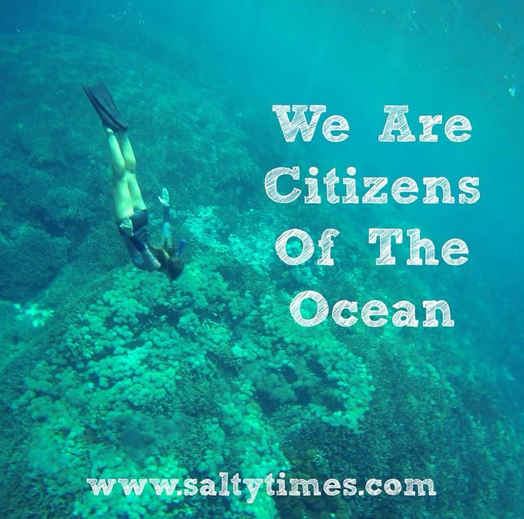 Citizens of the Ocean.  Http://www.saltytimes.com