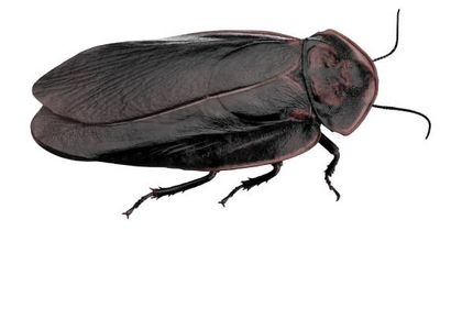 118 Best Bug And Pest Natural Remedies Images On Pinterest