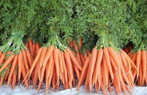 ЭФФЕКТИВНЫЙ СПОСОБ ПОСЕВА МОРКОВИ.  Морковка всходит на 3-5 день после сева!