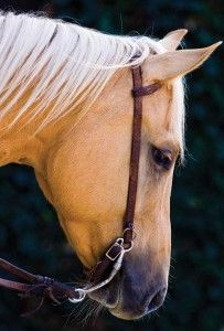 The way your horse holds his head speaks volumes about how he's feeling.