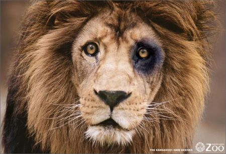 lion kangaroo - Google zoeken