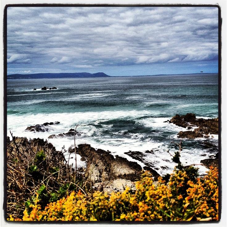 #wildsea #hermanus #southafrica