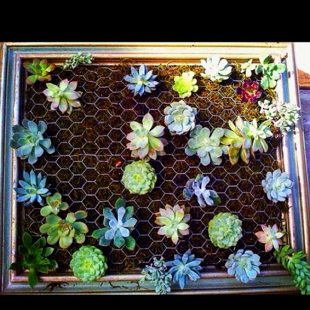 Succulent Art Crafts Pinterest Gardens Garden Ideas