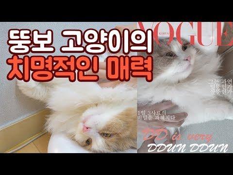 레깅스를 뜯어버린 심술난 고양이 - YouTube