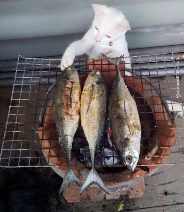 Humano recuerda, me gusta el pescado bien asado