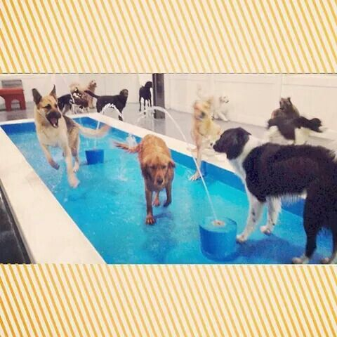 The Pups Love Our Indoor Pool Own A Dog Kennel