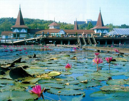 """Water lilies at the world´s largest thermal bath in Hévíz, Hungary. The curative effect of Lake Heviz was known since the times of the ancient Romans, although it's """"only"""" in the last 200 years that there are treatments taking place there. Lake Hévíz combines naturally carbonated medicinal waters with other kind of waters containing sulphur, calcium, magnesium, hydrogen-carbonate. A spring rushes up at a depth of 38 meters."""