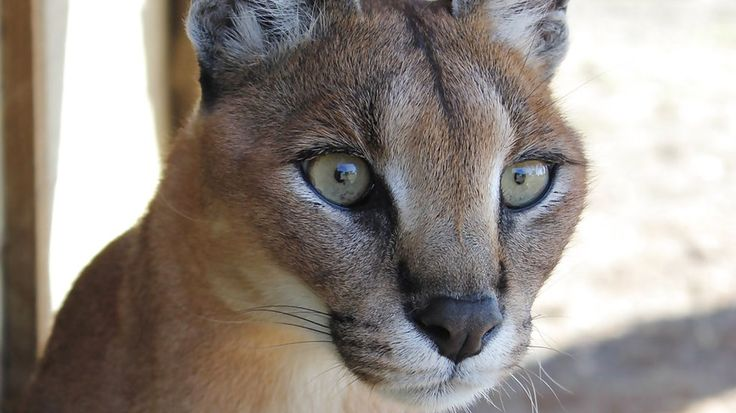 Wild Cat Centre - Kimberley - With 3 Day Welcome and Orientation Package - KILROY
