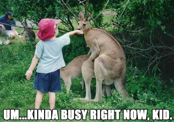 Um...Kinda Busy Right Now Kid Please Don't Feed Kangaroos While They Are Mating  ---- best hilarious jokes funny pictures walmart humor fail