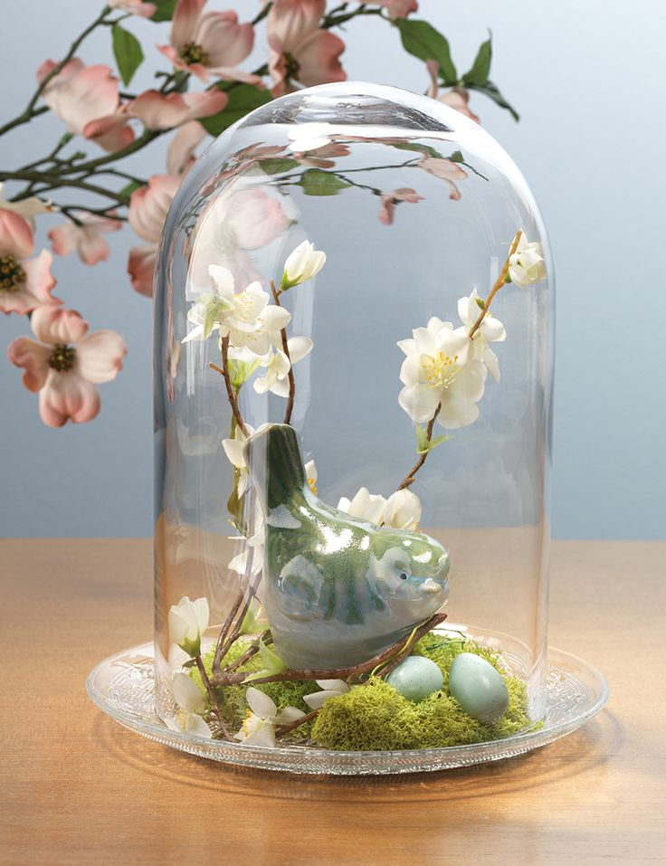 Best cloches aka glass domes bell jars images on