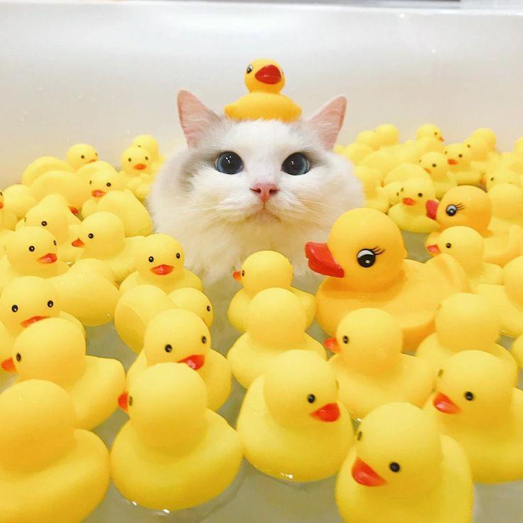 Un gato está conquistando Internet con sus ojos azules y sus fotos a la hora del baño The Animals, Cute Baby Animals, Funny Animals, Funny Cats, Small Animals, Cutest Animals, Happy Animals, Cute Kittens, Small Cute Babies
