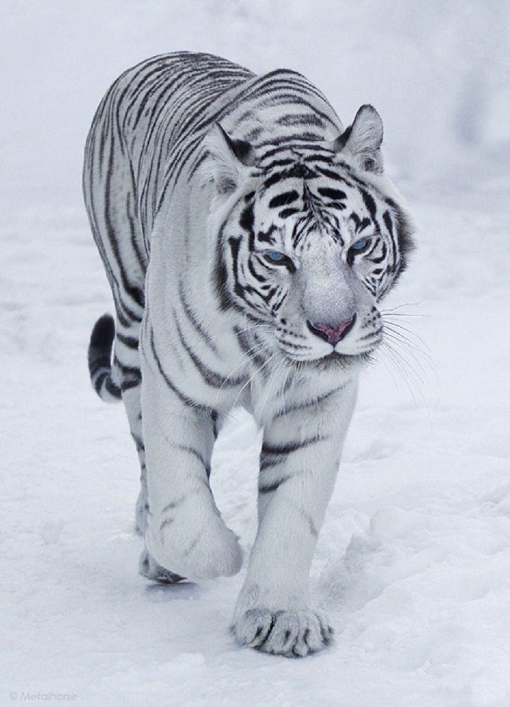 best-winter-wildlife-pictures_07