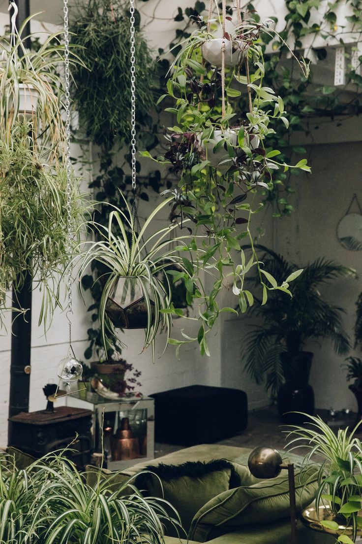 Hanging plants at Clapton Tram in London.