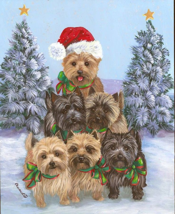 CHRISTMAS CAIRN TERRIER TAKE YOUR PICK? I LIKE THE ONE WITH THE SANTA HAT ON?