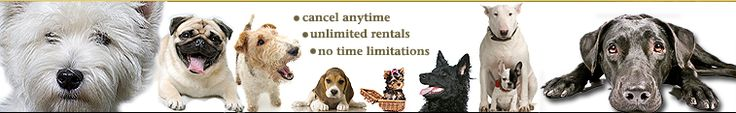 BowWowFlix.com: How It Works | DVD DVDs Rental | Rent Dog Training DVDs | Canine Behavior Videos