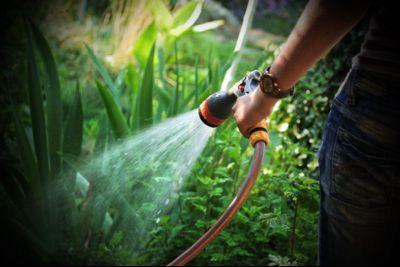 IQ Crops : Πόσο σπουδαίος είναι ο ρόλος του νερού για τη ζωή των φυτών;