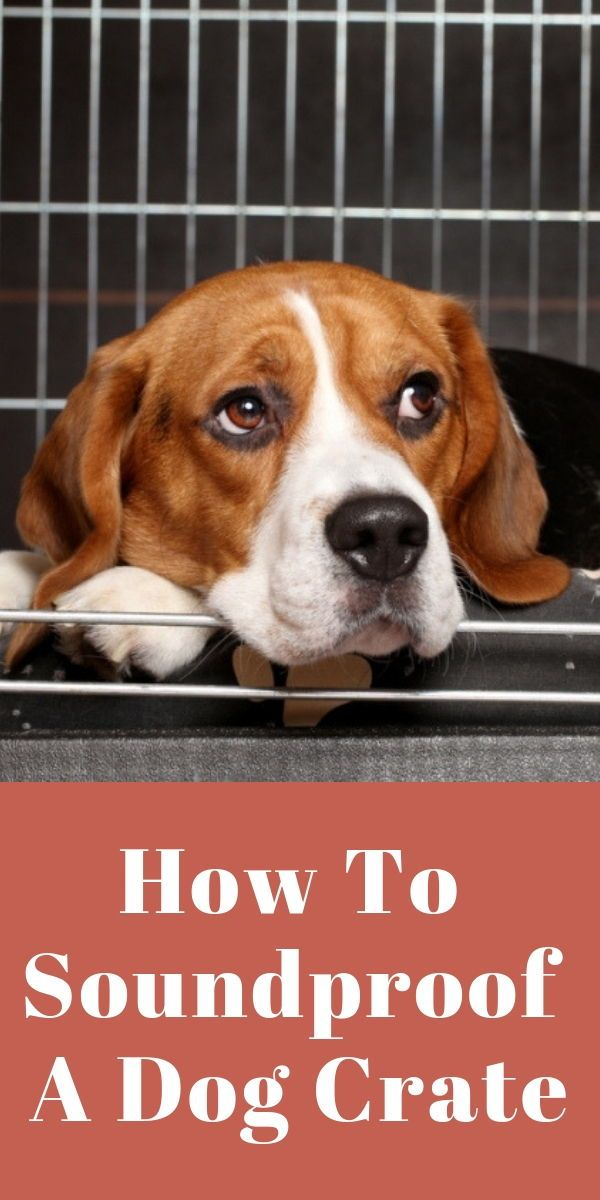 How To Soundproof A Dog Crate Or Kennel For Fireworks And Thunder