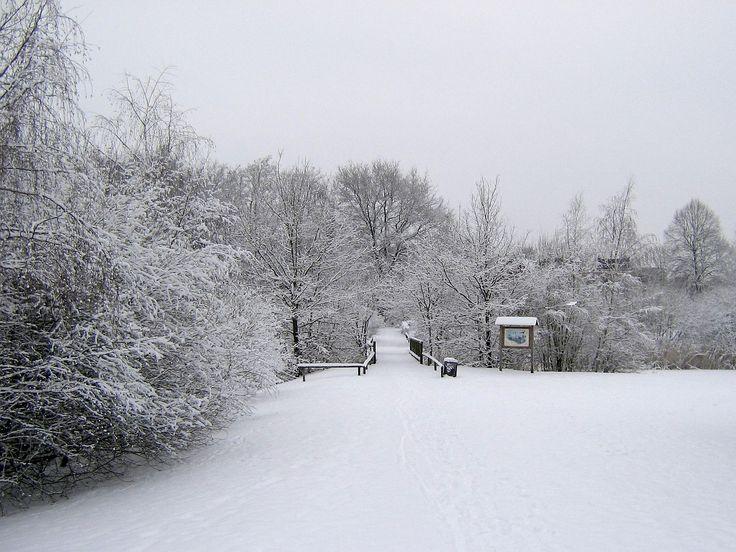 Musim Dingin, Salju, Dingin, Pemandangan, Winter Magic