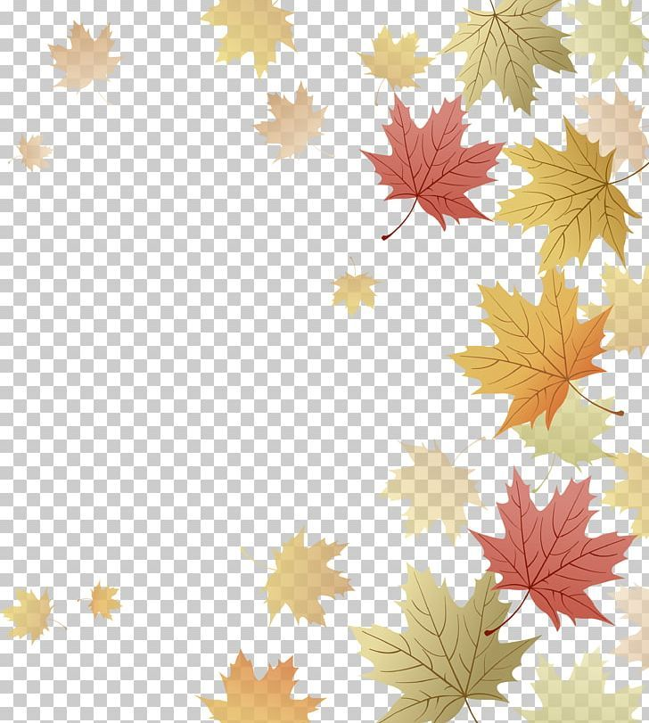 Japanese Maple Red Maple Maple Leaf Autumn Png Autumn Autumn Leaf Color Autumn Leaves Computer Wallpaper Deskt Autumn Leaf Color Leaf Coloring Maple Leaf