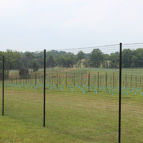 6' X 100' Standard Perimeter Deer Fence by DeerBusters. $125.95. Virtually Invisible. 600 lbs/sq. ft. Breaking Strength. Protects Your Garden From Deer. Lasts 15 Years. Easy To Install. Standard Deer Fencing is the perfect solution to deer damage in your backyard garden. Designed with the homeowner in mind, this deer fencing is easy to intall and maintain. The black grid construction of the deer fence allows it to become virtually invisible when installed, blending into tre...