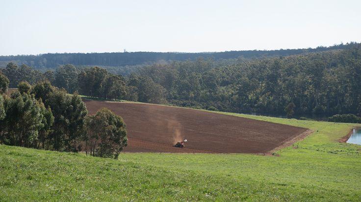 Farmland in the Pemberton wine region