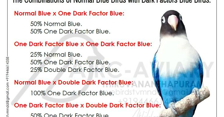 The Combinations of Normal Blue Birds with Dark Factors