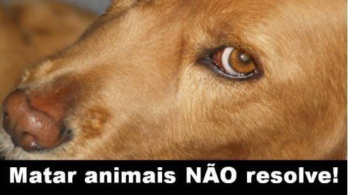 Petition · Bill Approval 1738/2011 which provides vaccinations and treatment against canine leishmaniasis and end of compulsory sacrifice of animals infected by the disease · Change.org