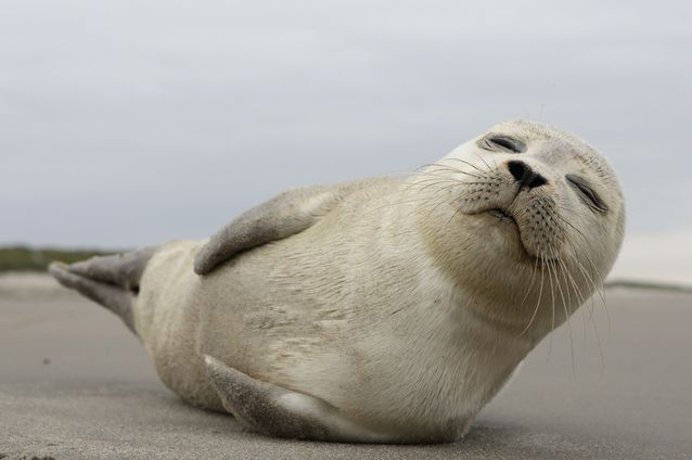 Pin On Seals And Sea Lions