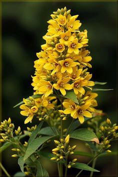 All About Yellow Flowers For Your Garden Put A Smile On Your Face