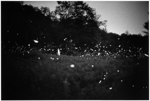 """Gregory Crewdson  From the """"Fireflies"""" series"""