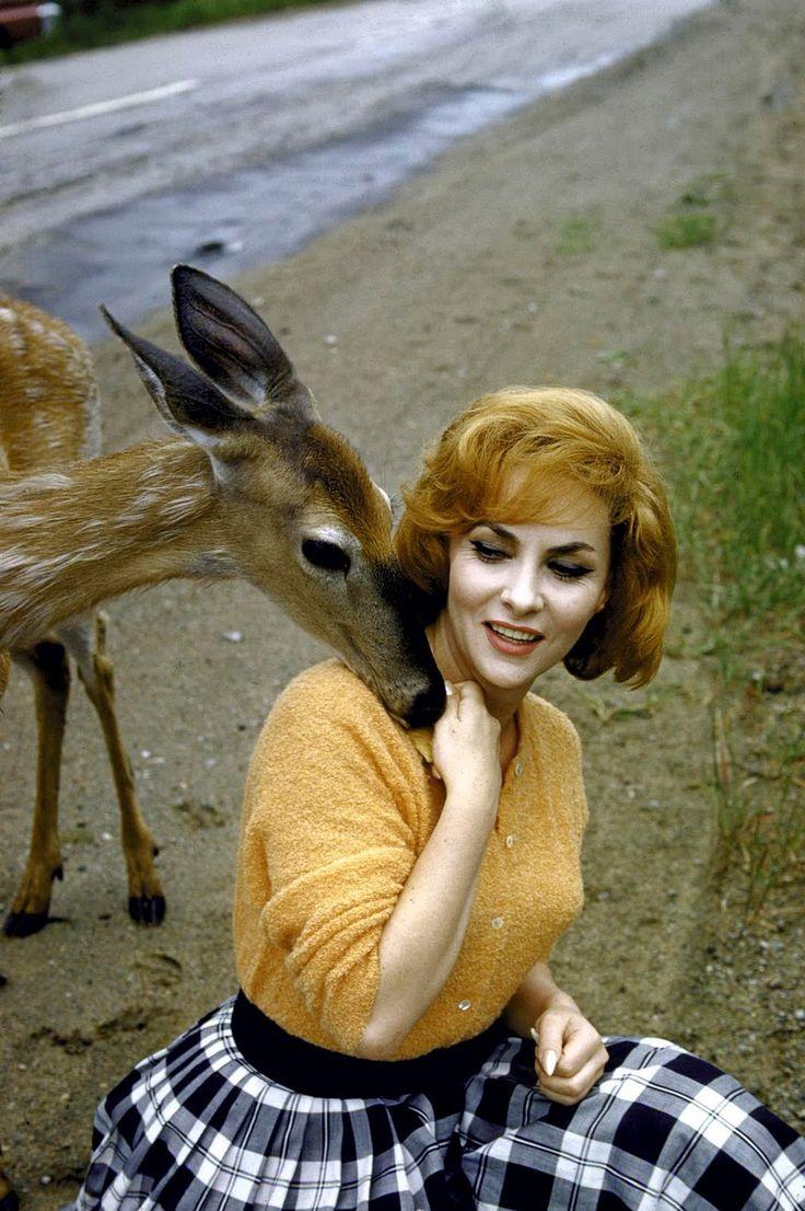 Image result for gina lollobrigida deer