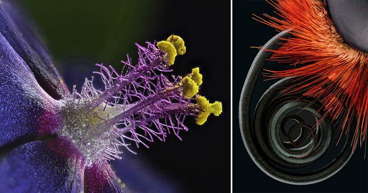 La photomicrographie, c'est de la macro photographie encore plus poussée. Préparez-vous à découvrir la nature comme vous ne l'avez encore jamais vue !