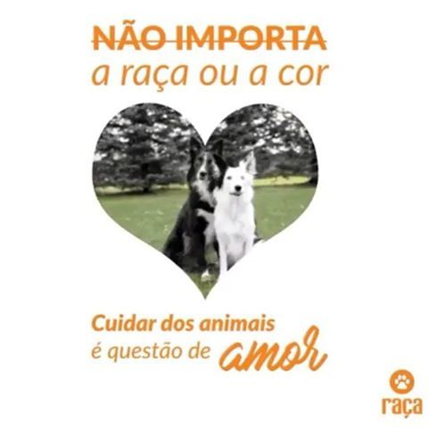 EU CUIDO C MTO AMOR ❤️ ❤️❤️ #petmeupet  #cachorro  #gato  #amoanimais  #euprotejo  #direitoanimal  #quartafeira