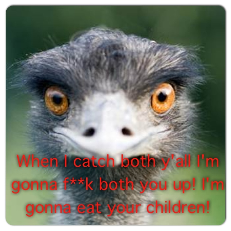 Kevin Hart & the ostrich. Oh my God to funny. Why would you throw a pen at him?