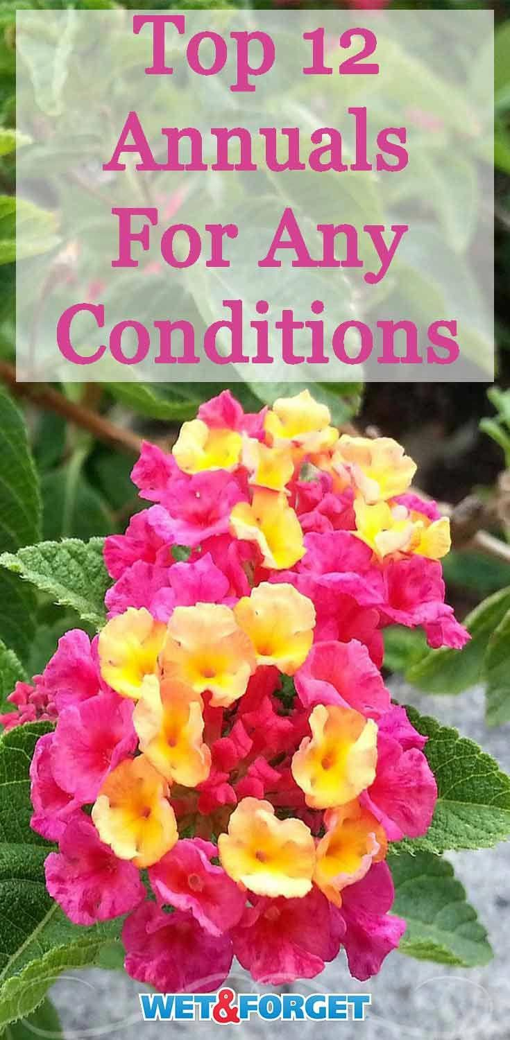Dry conditions Wet conditions Learn about which annuals are